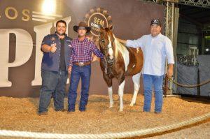 Paint Horse tem novo recorde de preços entre fêmeas, com lote comercializado por R$ 252.000,00