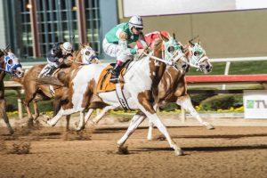 Raça se movimenta em todo o Brasil e criador lança desafio para cavalos de corrida