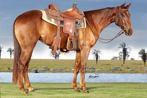 3º Leilão Online Corbett Ranch disponibiliza potros de geração para Trabalho