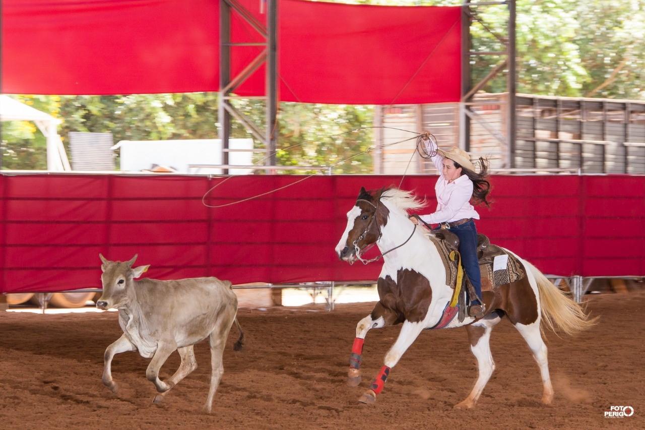 Cavalo mais exótico do mundo estará em Campo Grande (MS) neste domingo
