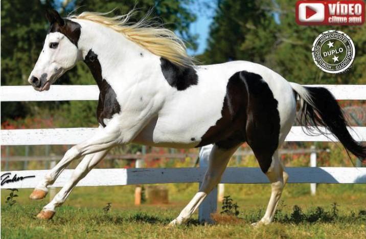Leilão Virtual CHS e MBA apresenta grande liquidez e reforça tendência do pré-lance na comercialização de cavalos