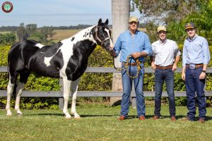 Cavalos pintados. Paixão de pai para filho