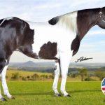 Leilão Virtual Performance Horses alcançou valores expressivos de comercialização