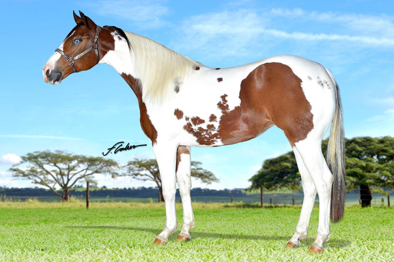 Leilão Virtual Performance Horses supera expectativas de vendas