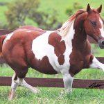 RESULTADO ACIMA DA EXPECTATIVA MARCA LEILÃO VIRTUAL WINNING HORSES