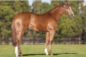 Leilão Performance Horses atingiu faturamento de mais de R$ 500 mil