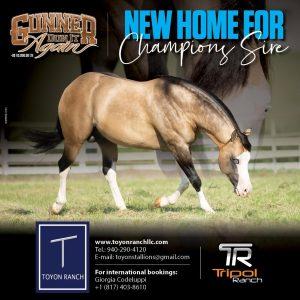 Toyon Ranch (USA), Gunner Dun It Again new home